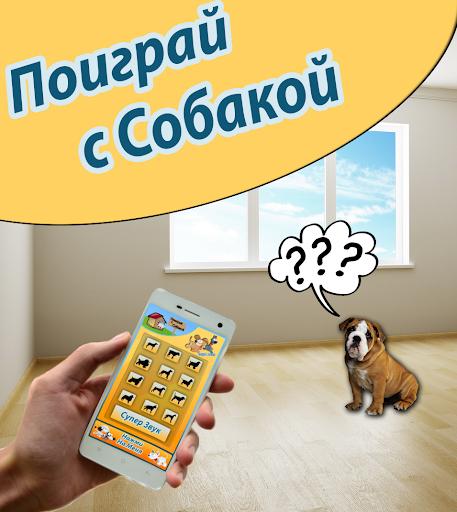 【免費娛樂App】Поиграй с собакой-APP點子