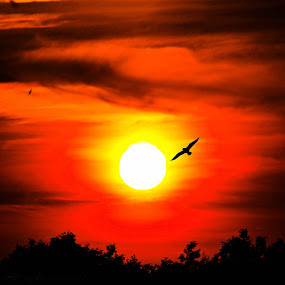 Red skies by Catherine Cross - Landscapes Sunsets & Sunrises ( bird, sky, red, tree, sunset, silhouette )