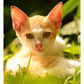 Pet by Madhu Payyan Vellatinkara - Animals - Cats Kittens ( cats, grass, pets, luvely, beauty,  )