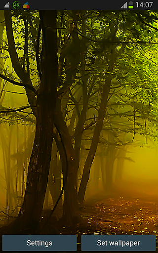 Rain Wood HD Live Wallpaper