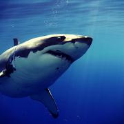 Shark LW