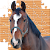 Puzzle Horses file APK Free for PC, smart TV Download