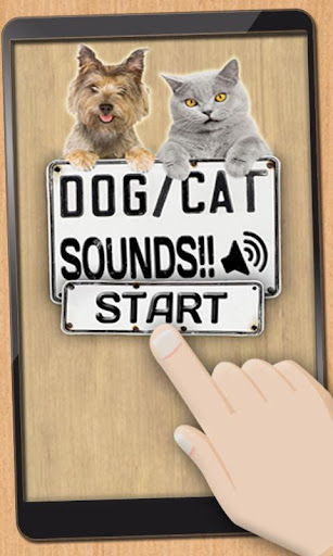 Sounds of dogs and cats