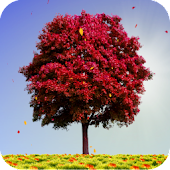 Autumn Trees Live Wallpaper