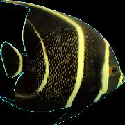 Ocean Defender / Aquarium Fight Fish Fun APK for Ubuntu