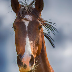 Bronze Beauty by Linda Tiepelman - Animals Horses ( field, pony, hwy d, missouri, equine, new melle, horse, horsy, horsey, equestrian, #GARYFONGPETS, #SHOWUSYOURPETS )