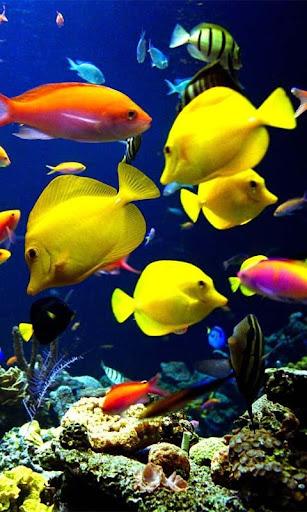 【免費個人化App】Ocean Aquarium 3D Wallpaper-APP點子
