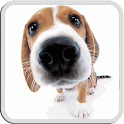 DOG LICKS SCREEN LWP PRO icon