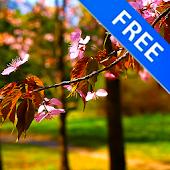 3D Sakura Blossom Stick Free