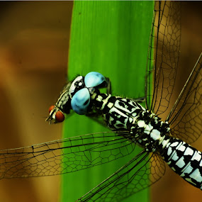 by Gilang Franasia - Novices Only Macro (  )