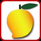 Mango Hunt