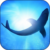 White Shark Video Wallpapers