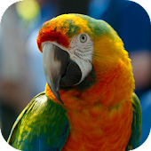 The Smart Talking Parrot