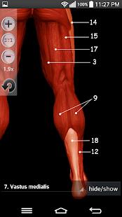 Anatomy Muscles - screenshot thumbnail