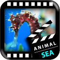Best Sea Animals icon