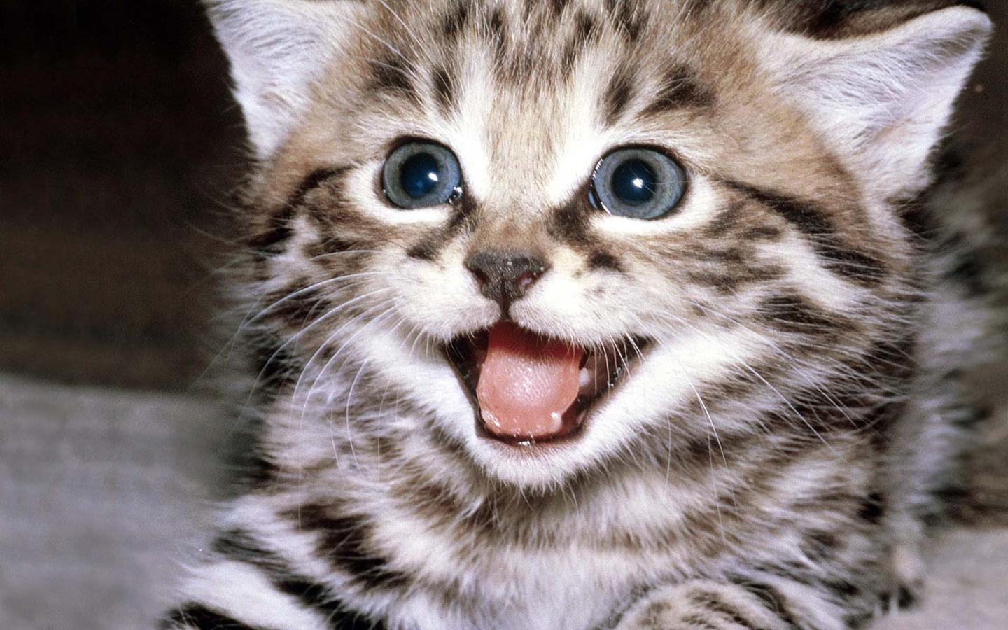 Cute Kitten Wallpaper Apl Android Di Google Play