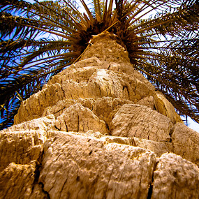 Palm by Mohamed Hussein - Nature Up Close Trees & Bushes ( palm, planet, tree, root, wide, angle )