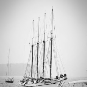 Misty Harbor by Danielle Calkins - Black & White Objects & Still Life ( sailing, ocean, transportation, boat, sailboat,  )