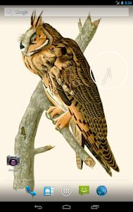 Audubon's OWLS HD+ Wallpaper - screenshot thumbnail
