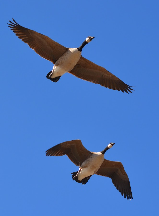 by Sathyanarayanan Shanmugam - Animals Birds (  )