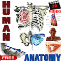 Free Download 3D Video Anatomy Lectures APK for Samsung