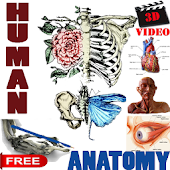 3D Video Anatomy Lectures
