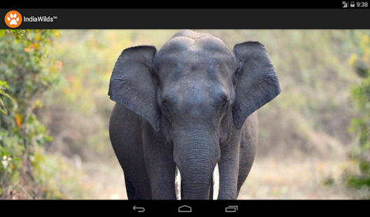 IndiaWilds- screenshot thumbnail