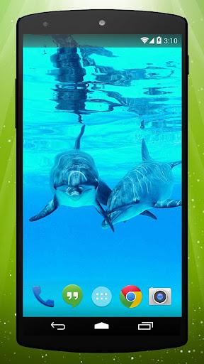Best Dolphin Live Wallpaper