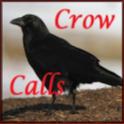 Crow Calls logo