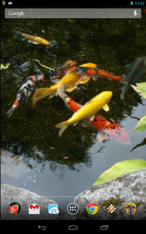 Magic Touch Realistic Koi Live Wallpaper Android