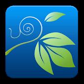 Ivy Share