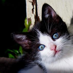 Good Morning Sunshine by Nicolas Los Baños - Animals - Cats Kittens ( cat, kitten, pet, sunshine, cute, hawaii, animal, , baby, young )