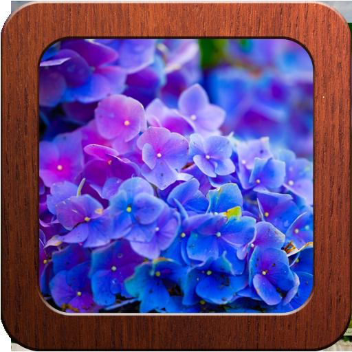 Beautiful Flowers Photo Frames