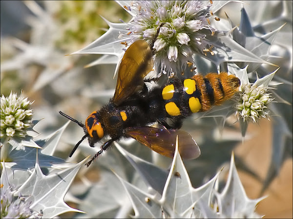 Stinging Insects | Common Pest Identification In