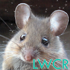 cute mouse live wallpaper icon