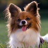Cute Dog Wallpapers