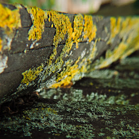 Over the time by Christian Tiboldi - Nature Up Close Other Natural Objects ( up close, fence, macro, over, old, time, oldie, close up,  )