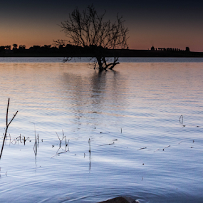Water, Tree and Sunset by Alexandre Mestre - Landscapes Waterscapes ( beja, tree, sunset, alentejo, dam, portugal )