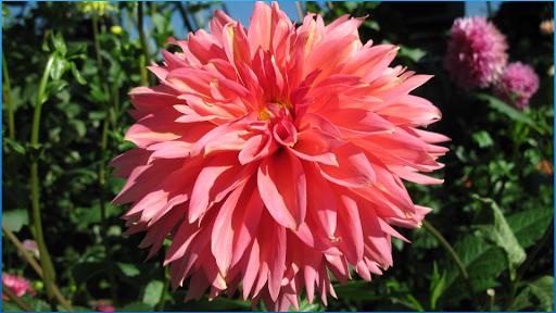 ワンダフル花の壁紙