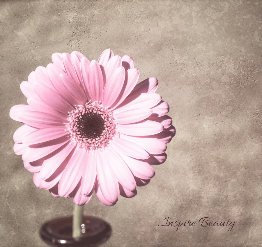 Inspire Beauty by KJ DeWaal - Typography Captioned Photos ( texturedphotography, daisy, pink, beauty, typography, bottle, inspire, gerbera, pretyy,  )