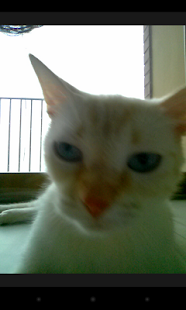 Snapcat - Photo app for cats - screenshot thumbnail