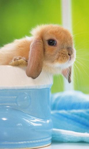 Lovely Rabbit Live Wallpaper