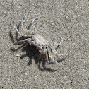 Unkown Crab