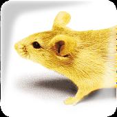 Stieger Annahme-App