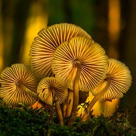Fungi by Peter Samuelsson - Nature Up Close Mushrooms & Fungi