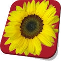 Sunflower Live Wallpaper Pro icon