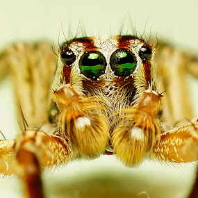 Green eyes by Sam Moshavi - Animals Insects & Spiders
