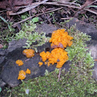 Witch's Butter