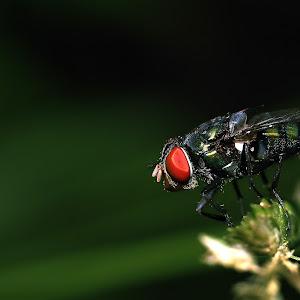 lalat edit.jpg
