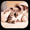 gato perezoso Fondo animado icon